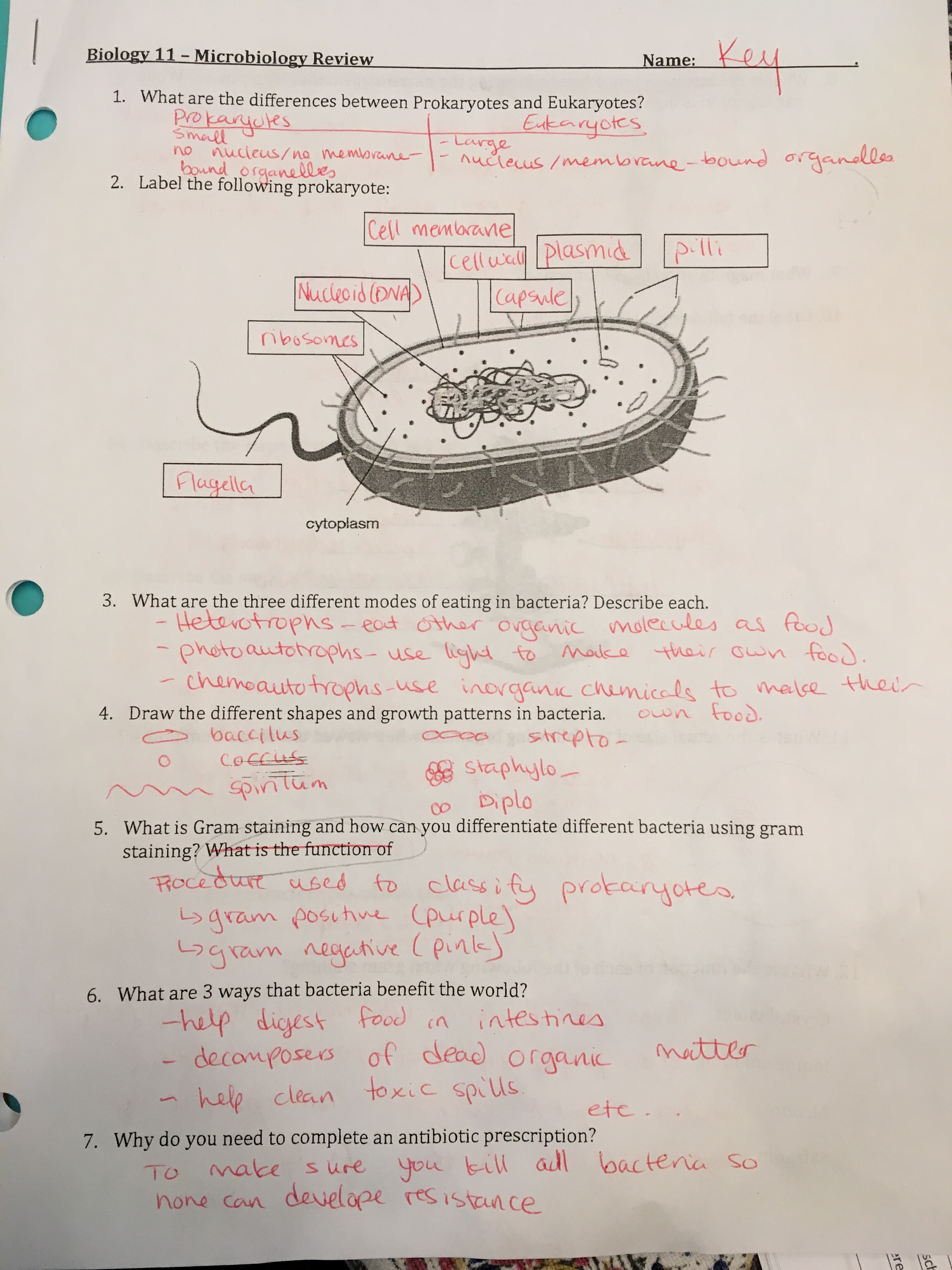 Biology 11 Moein Ferdosian – Bacteria and Viruses Worksheet